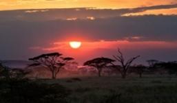 8 Days Rwanda Gorillas And Uganda Wildlife