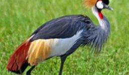 12 Days Birding Tour Uganda