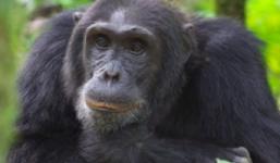 Primate Tour Uganda