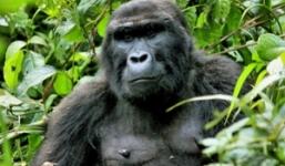 2 Days Rwanda Gorillas