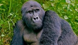 Gorilla Luxury Trekking