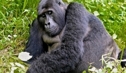 4 Days Trek Rwanda