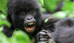 3 Days Rwanda Uganda Gorillas