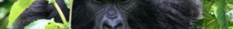 4 Days Rwanda Gorillas
