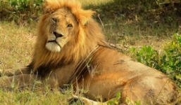 13 Days Kenya Tanzania Safari
