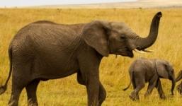 10 Days Tanzania Uganda Safari