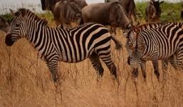 Tanzania Safari & Gorilla Trekking Uganda